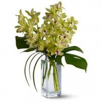 Orquídeas Cymbidium, Brasil